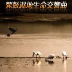 第一屆金善獎樂活環保類最佳攝影獎_鰲鼓溼地生命交響曲