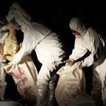 禽流感疫情延燒 如何防範?