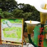 竹子湖海芋季 6步道浪漫走春