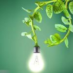 活植物也可以發電