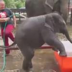 小象洗澎澎