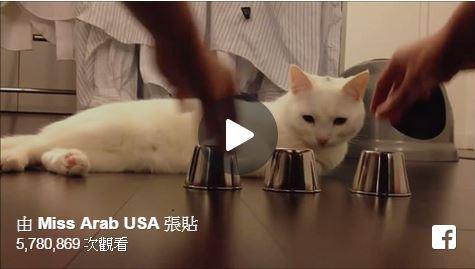 超強神貓 WOW~