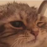這小貓喝水的樣子真可愛呀