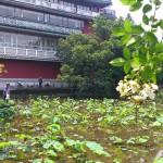 《生活省思》植物園半日遊