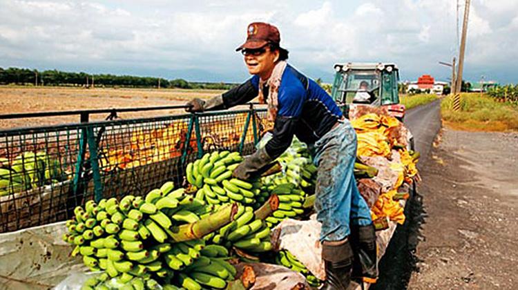 超商香蕉的全球化戰爭