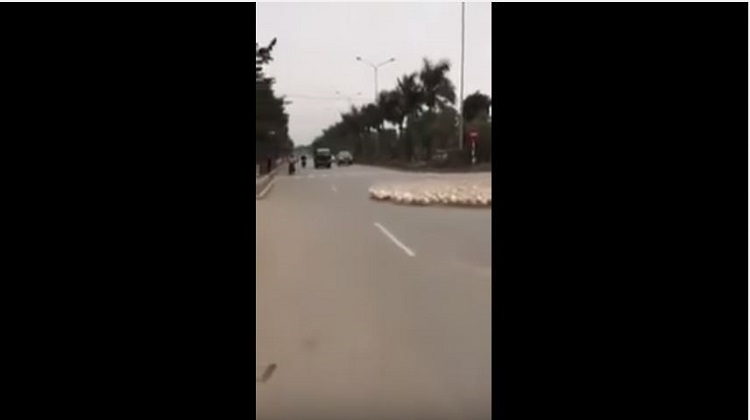 一群鵝過馬路