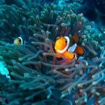探索水下的世界