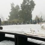 寒流籠罩全台》60人因低溫猝死 新北市府成立寒害應變中心