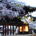 櫻花處處有,爲何一定要去日本看