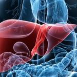 BMI正常也有脂肪肝 竟因鮪魚肚惹禍