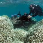 綿延2300公里的大堡礁高達9成已白化!搶救要10年超過2千億