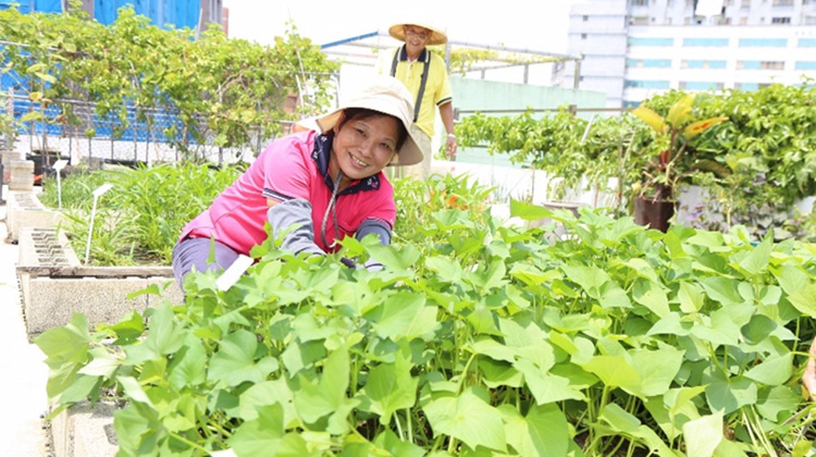 社區屋頂打造開心農場 一年減少冷氣用電67.8萬度