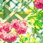 《自然書寫》日出日落,花開花謝