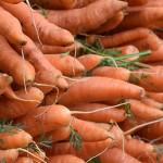 菜蟲就吃紅蘿蔔?