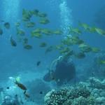 全球珊瑚礁正面臨死亡威脅