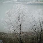 春色遲遲雪作花