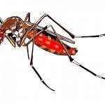 一隻蚊子可能就傳播多種病毒