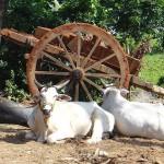 網路也要打進印度的窮鄉僻壤