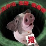 當只豬沒什麼不好