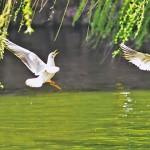 《生命故事》一潭寧靜美麗的湖水