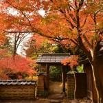 秋季到日本賞楓怎麼安排?攝影迷說「神奈川」這 5 個秘境最值回票價!
