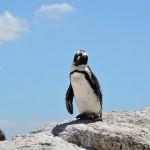 企鵝挨餓死亡南極出大問題