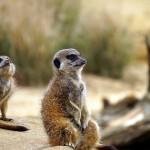 肯亞探訪野生動物自助旅行