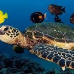 海龜冬眠的秘密:呼吸