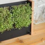 這款「迷你垂直農場」只要簡單 2 步驟:放種子、加水,10 天後就能收成營養滿滿的植物苗