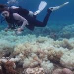 海洋與氣候變化之間的關聯