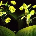 用[植物]取代[電燈]不是夢!