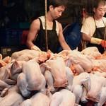 譚敦慈:傳統市場買雞肉安全嗎?