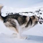 你的狗準備好當明星了嗎?