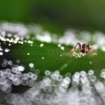 永續時尚的新材料:「水」做的纖維