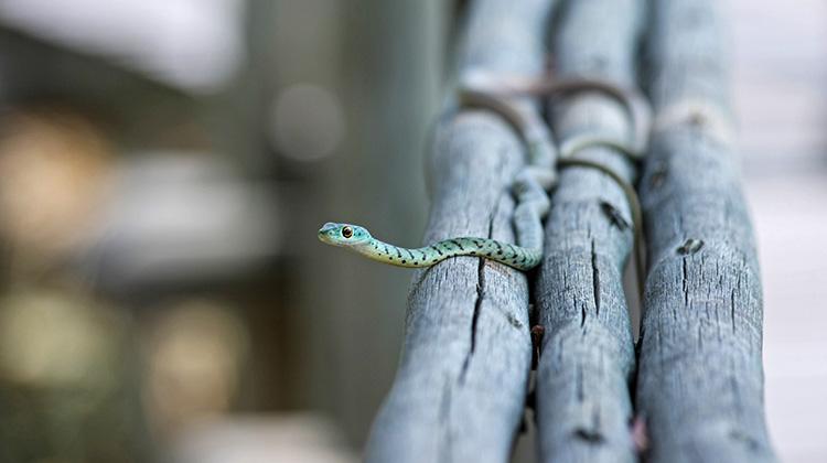 如果沒有蛇怎麼辦?