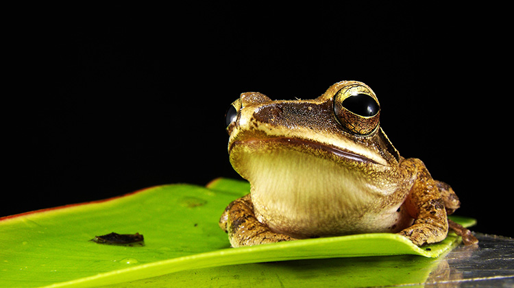 你的旅行青蛙會算數嗎?還是只會寄明信片?