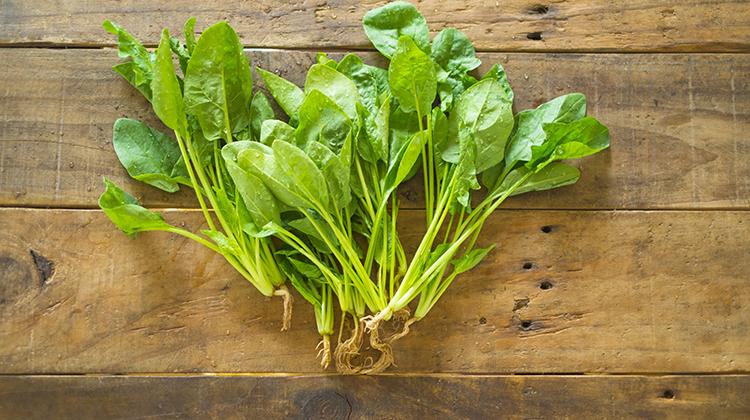 長肌肉,多吃菠菜及含支鏈胺基酸食物就對了
