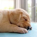 養狗可降低心臟病死亡率?