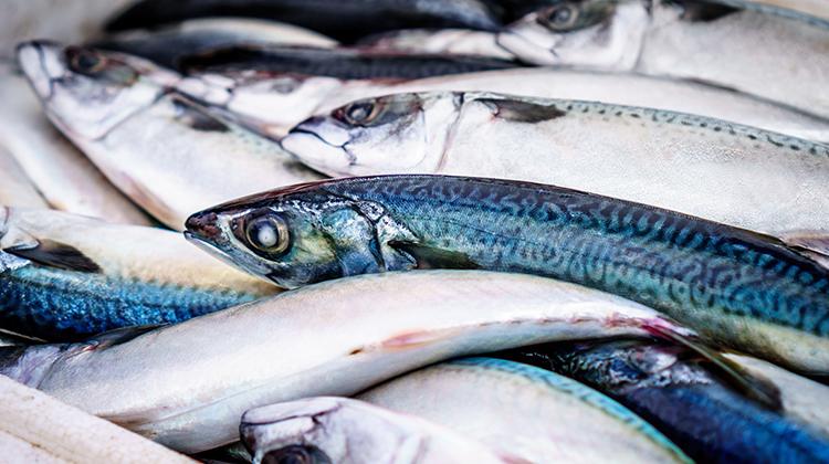 常吃魚身體累積太多甲基汞、有機錫,恐不利懷孩子