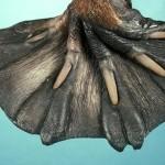 動物們神奇的腳
