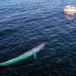 鯨魚為什麼這麼大?