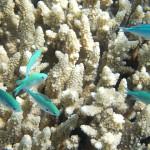 澳洲花三億美元修復大堡礁