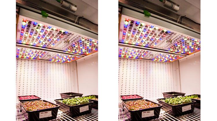 歐司朗智慧植物照明解決方案支持NASA食品生產研究