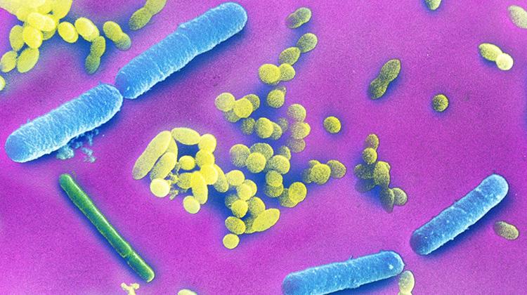 你的腸道細菌可能讓你更難減重