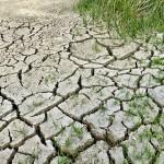 氣溫升高加速農作物蟲害情形