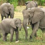 越南推廣零傷害友善大象之旅