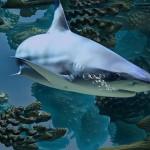 游速最快鯊魚恐面臨滅絕