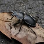熱浪摧毀了雄性昆蟲生殖力
