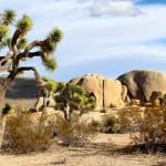 美國家公園因停擺需300年恢復