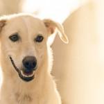 狗比人嬌 狗兒日托費近5萬